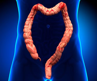 Chicken Skin Mucosa in the GI Tract