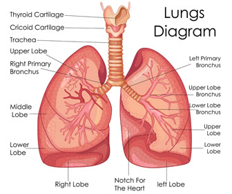 Nurses and Pulmonary Disease