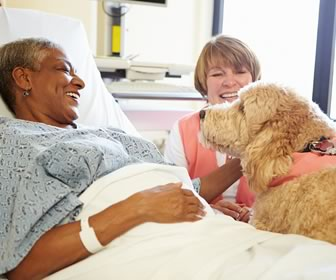 Animal Cuddles at the Hospital? Yes Please!