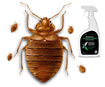 Bed Bug and Flea Spray by Hopkins Medical